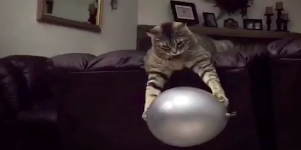 A Playful Cat Skillfully Catches A Balloon Between Both Paws While Perched Upon A Purple Sofa
