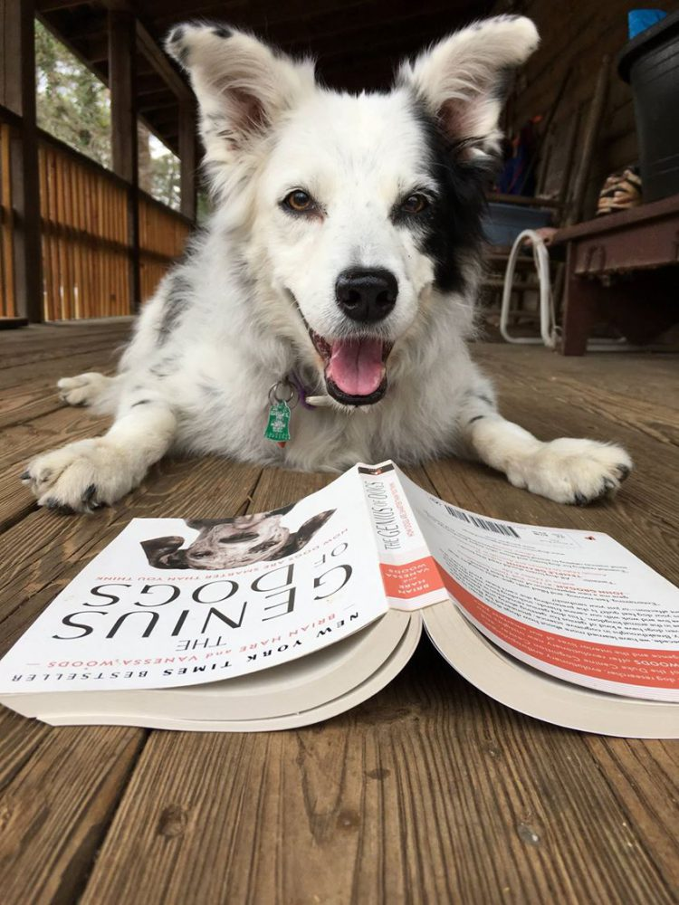An Incredibly Smart Dog Who Understands Over a Thousand Words in the English Language