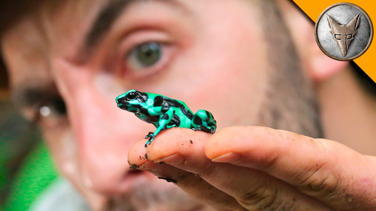 Coyote Peterson Goes Off In Search of an Elusive Green and ...