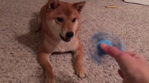 Shiba Inu Fidget Spinner