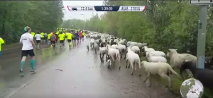 Sheep Goats Runners WFL Munich