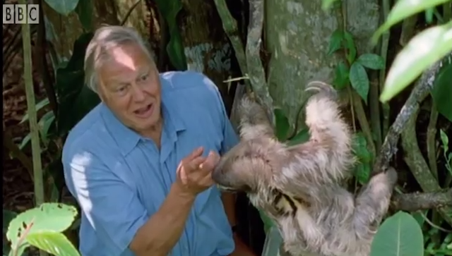 Sir David Attenborough Climbs a Ladder In Order to Surprise a Laid Back Sloth in a Tree