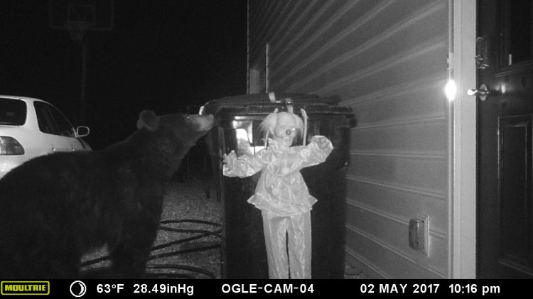Trash Stealing Bear Runs Away in Fear After Setting Off Creepy Motion Activated Clown Doll Alarm