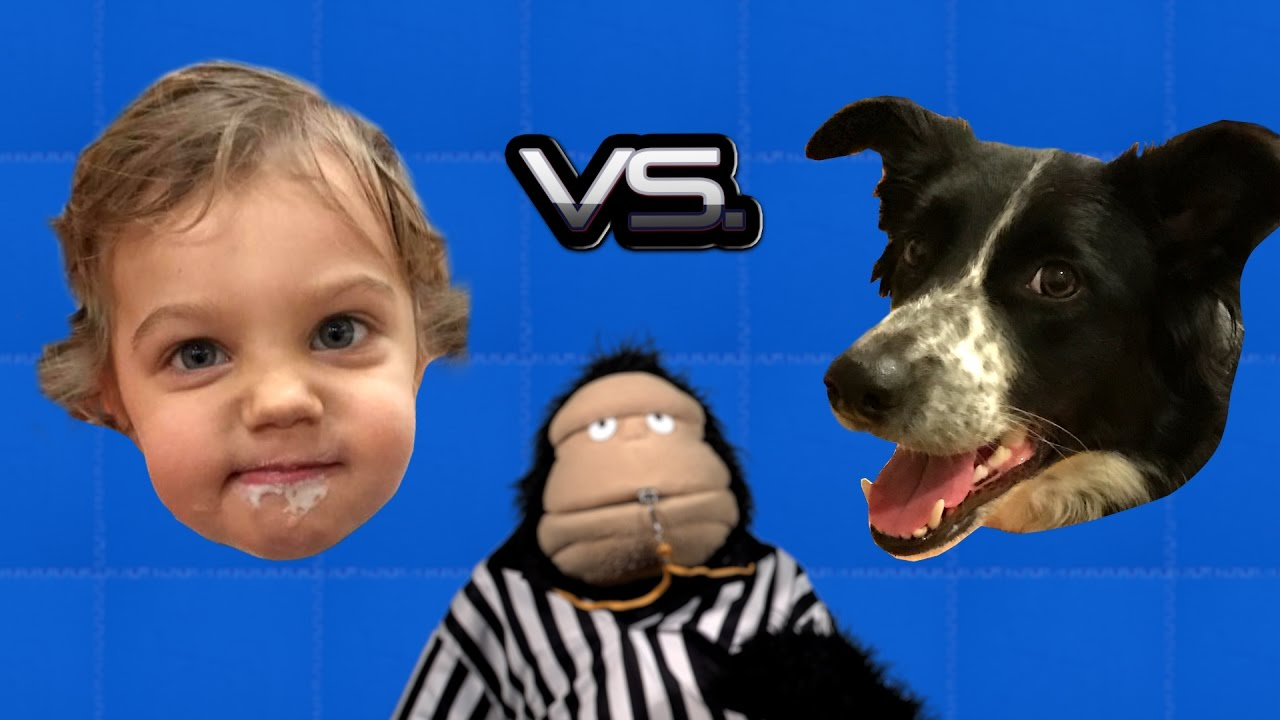 Glove and Boots Pit a Two Year Old Child Against a Two Year Old Dog in a Variety of Amusing Contests