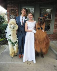 Wedding Llamas Portland Couple