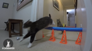 Cat Obstacle Race