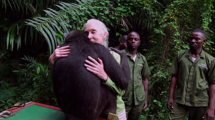 Chimp Hug Dr. Jane Goodall