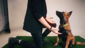 Dog Magic
