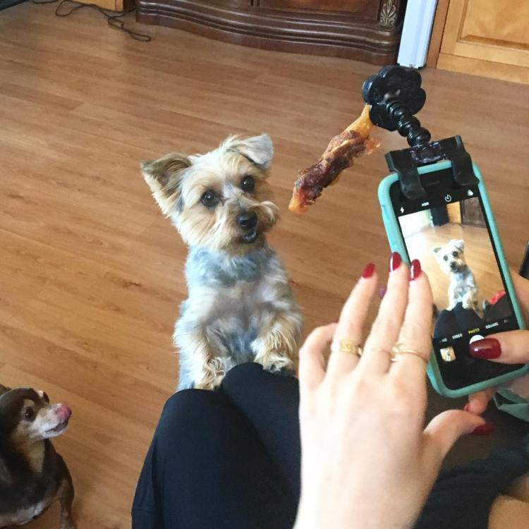 Flexy Paw, A Flexible Phone Attachment That Grabs a Pet's Attention for Pictures With a Yummy Treat
