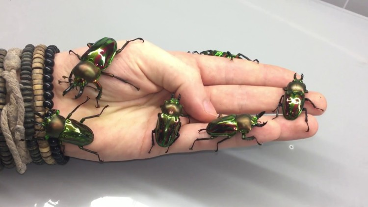 German Insect Breeder Adrian Kozakiewicz Lets Bugs Crawl All Over His Face and Hands