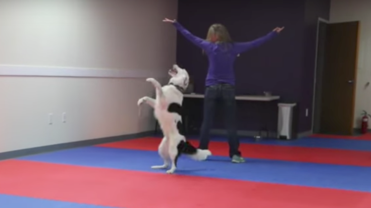 An Agile Border Collie Performs an Incredible Dance Routine In Perfect Time With His Beloved Human