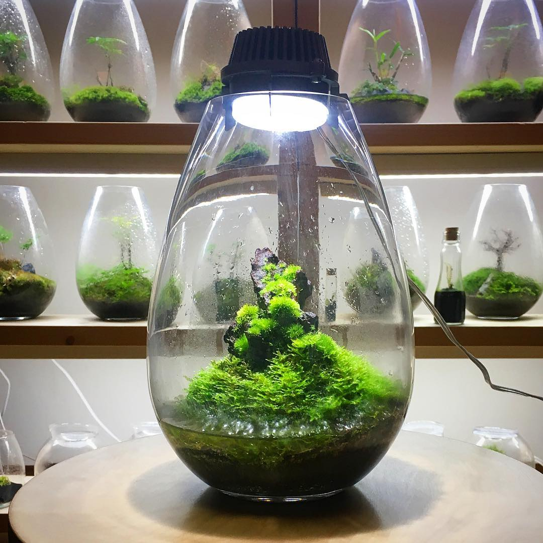 Innovative Indoor Led Moss Terrariums