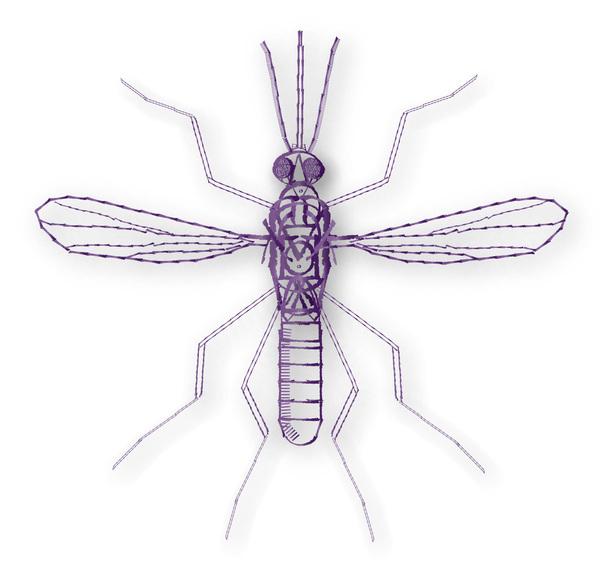 Typographic Insects Mosquito