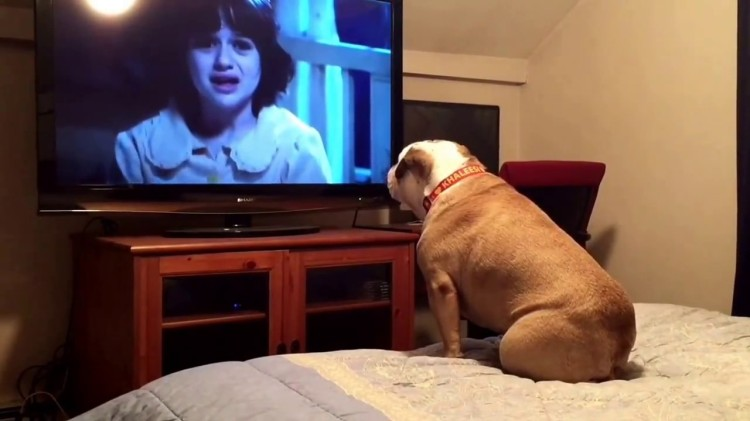 Vigilant Bulldog Tries to Warn the Family in a Horror Movie About a Ghost in the Corner of the Room