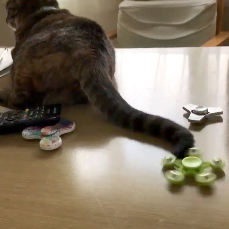 A Relaxed Cat Whirls a Fidget Spinner Around and Around With Its Tail Without Even Realizing It