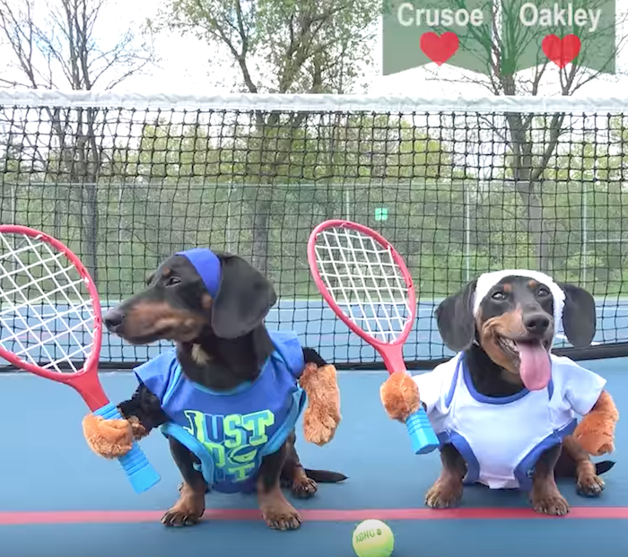 Doxie Tennis