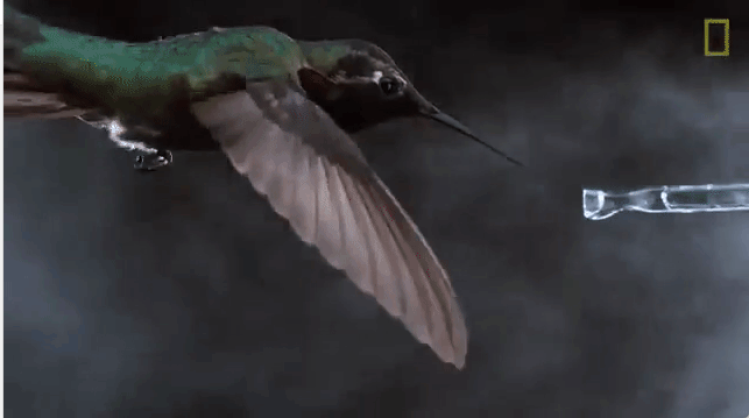 Mesmerizing Slow Motion Footage of Brightly Colored Bee Hummingbirds In Flight
