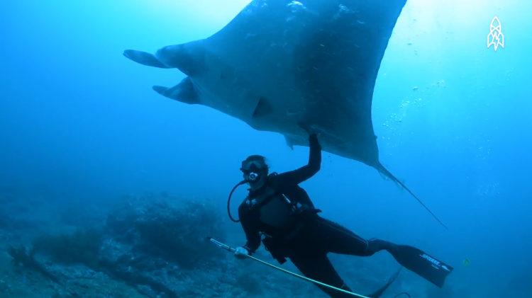 Renowned Marine Biologist Shares Her Love, Respect and Concern for Endangered Manta Rays