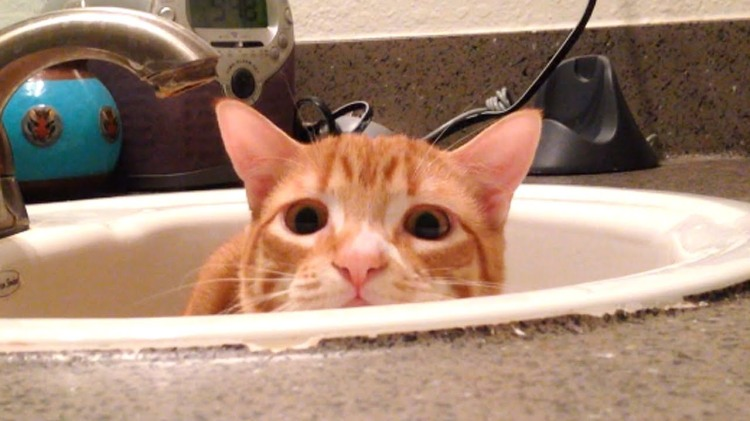 Orange Tabby Cat Half-Heartedly Hides From His Human's Hand While Safe Inside the Bathroom Sink