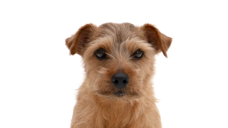 A Cute Puppy Dramatically Explains Why Fireworks Are Particularly Disturbing to Them This Year