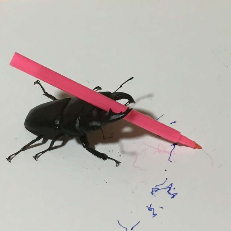 An Oddly Artistic Stag Beetle Shares His Magic Marker Masterpieces on Social Media