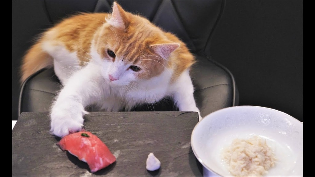 Chef Asks His Cats to Choose Between a Gorgeous Handmade Sushi Style Meal or Canned Cat Food