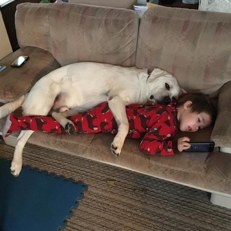 Tupper and Lego, The Amazing Friendship Between a Young Boy and His Beloved Autism Service Dog