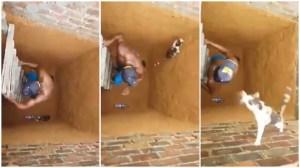 Cat Escapes Hole