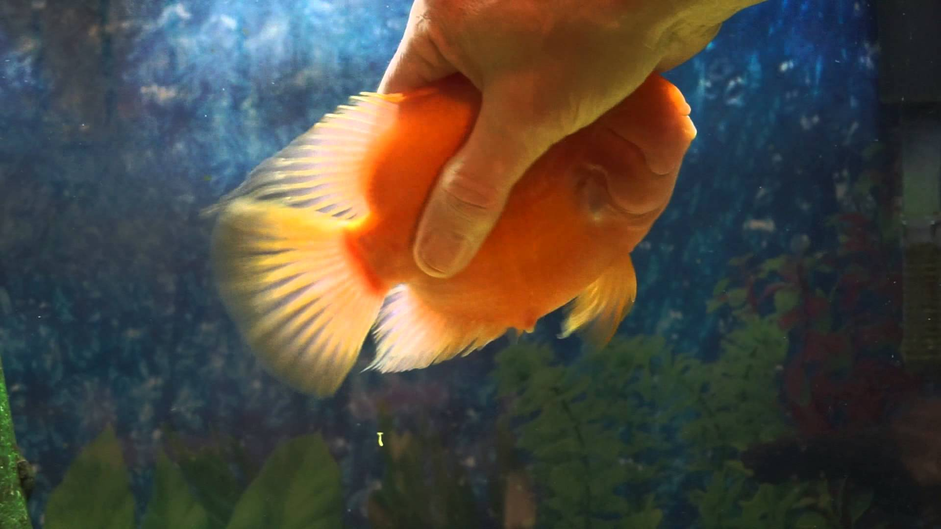 A surprisingly friendly pet fish would rather play with for Good pet fish