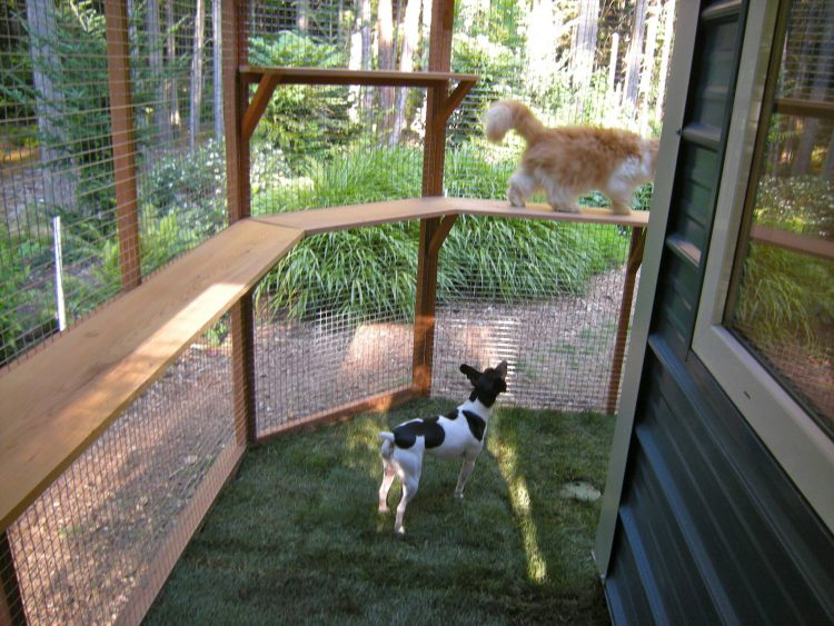 Catio and Dogio