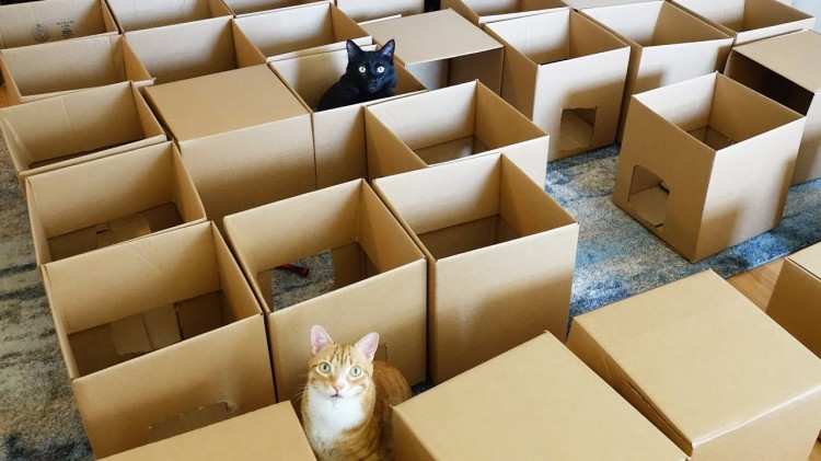 A Cat Maze Made Out of 50 Moving Boxes