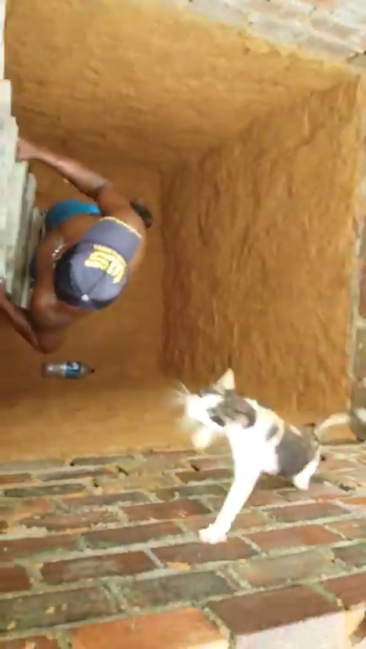 Cat Makes Fantastic Ninja Escape From a Hole After Concerned Man Climbs Down Attempting a Rescue
