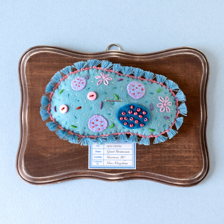 Highly Detailed, Plaque Mounted Giant Paramecium Made Out of Felt by Artist Hiné Mizushima