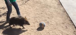 Molly Soccer Playing Bush Hog