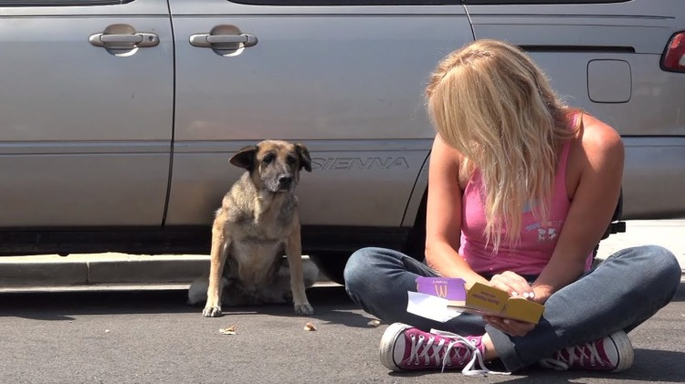 Rescuers Gently Coax a Stray German Shepherd Out From Under a Parked Minivan With Food