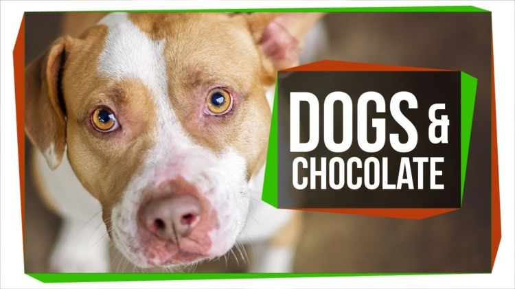 The Specific Alkaloid in Chocolate That Makes it Deadly to Dogs and Cats