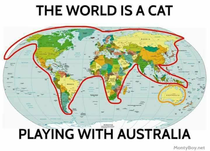 The world is a cat playing with australia gumiabroncs Image collections