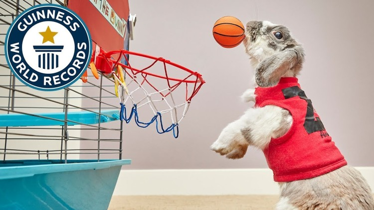 A Little Bunny Sets the Guinness World Record for the Most Slam Dunks Made by a Rabbit In a Minute