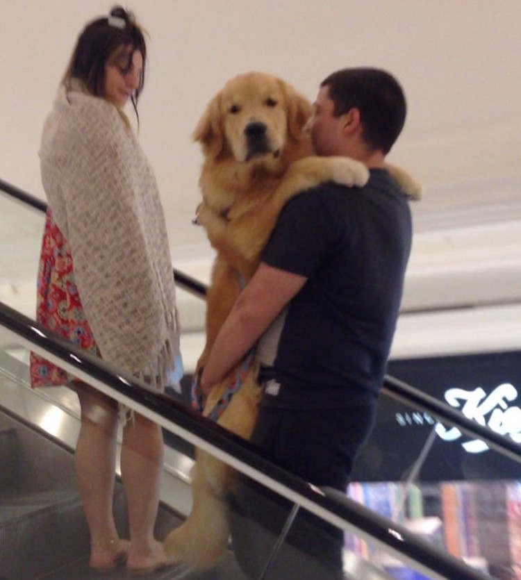A Silly Dog Refuses to Ride the Escalator Unless His Human Picks Him Up and Carries Him