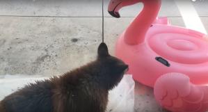 Bear vs Flamingo