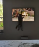 Cat Jumps at TV Bird