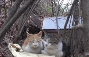 Cat Protecing Disabled Cat
