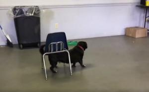 Dog Dragging Chair