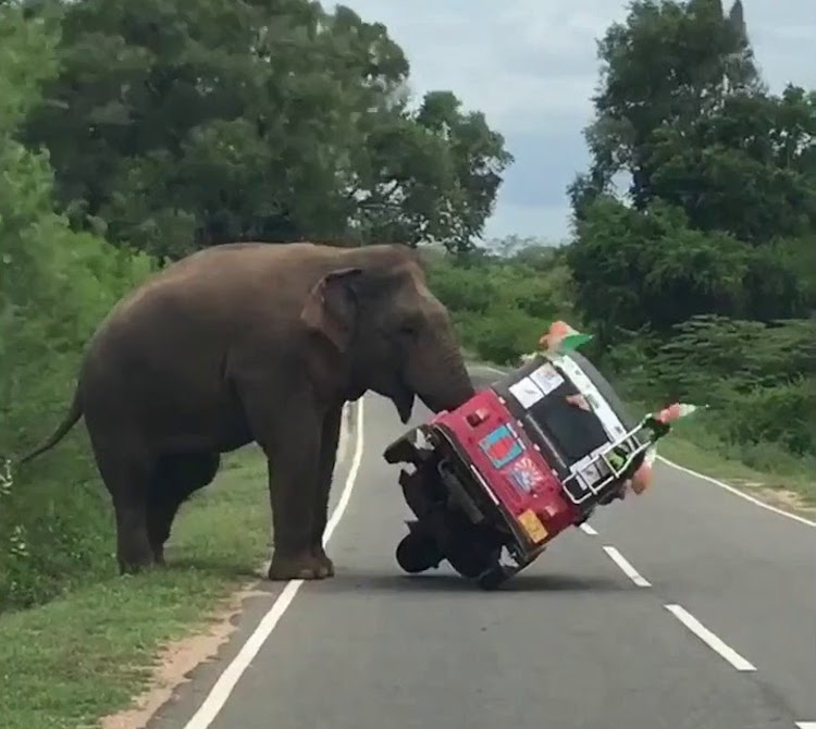 A Hungry Elephant Knocks Over a Three Wheeled Vehicle in Search of Something Good to Eat