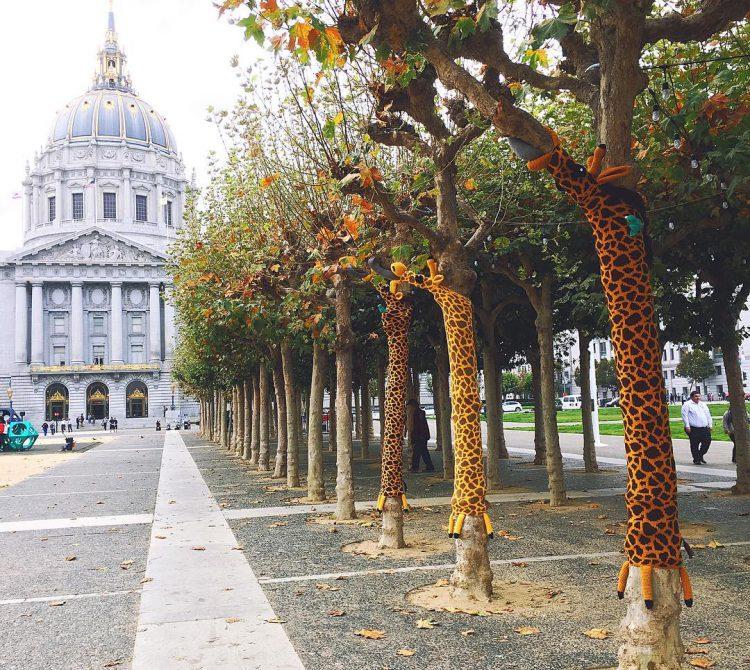 Rotunda of San Francisco City Hall   Wandering Dragonfly  San Francisco City Hall Trees
