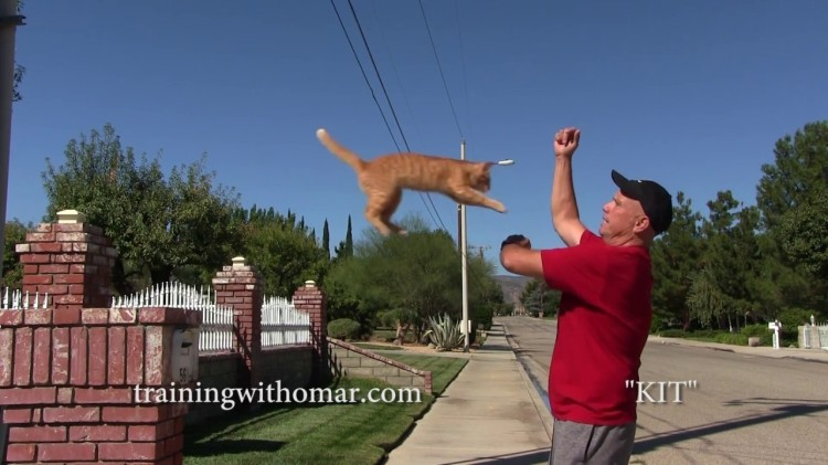 Jumpy the Dog's Human Skillfully Demonstrates How Training a Cat Can Be Fun