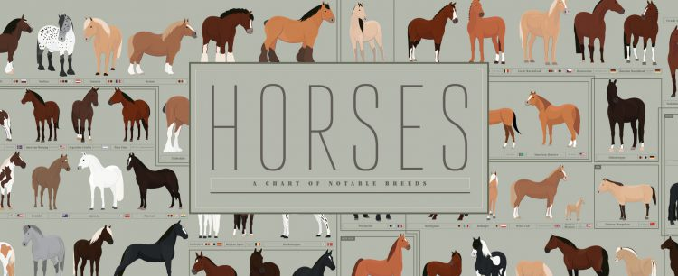 Notable Horse Breeds