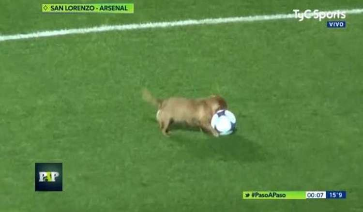 A Lively Little Dog Interrupts a Televised Soccer Match in Argentina to Chase the Ball and Play Fetch