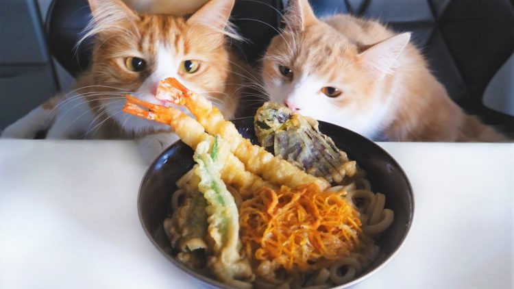 Man Prepares a Yummy Meal of Tempura Udon Noodles Under the Watchful Eyes of His Cats
