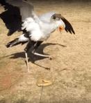 Toy Snake Bird